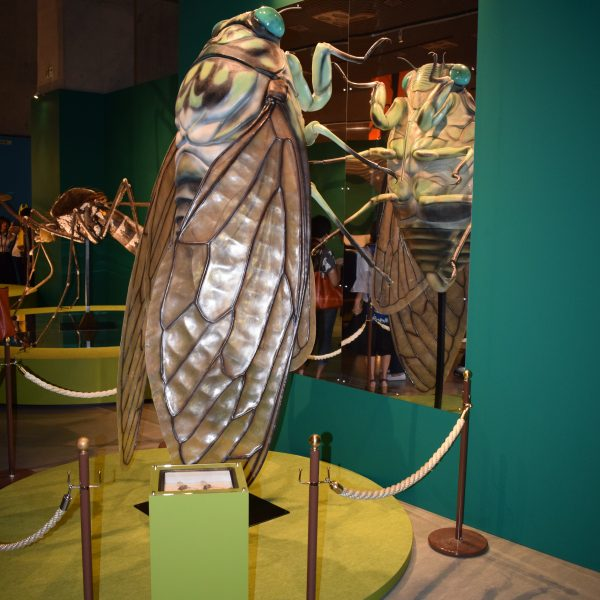 「魅力を多角的に紹介」科博が昆虫展