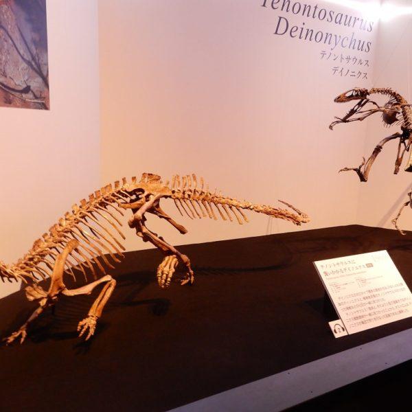 「眼前に迫力の全身骨格」科博で恐竜博