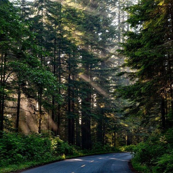「森林との関わりで幸福度高まる傾向」滋賀県立大など山離れを防ぐ手がかり探る