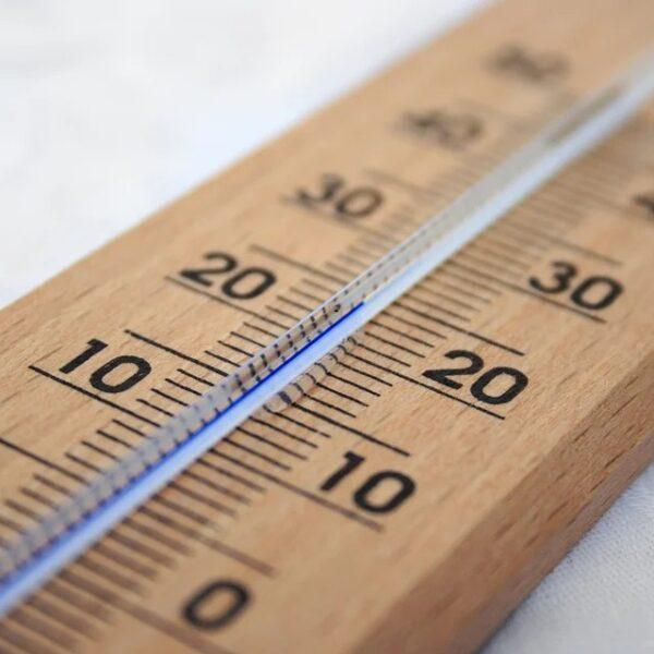 ショウジョウバエ幼虫 移動速度が気温と相関